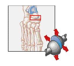ejemplo de artrodia
