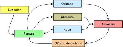 representación de un ecosistema básico