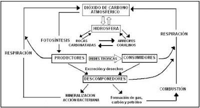 carbono oxígeno nitrógeno azufre fósforo agua ciclos biogeoquímicos biología medio ambiente