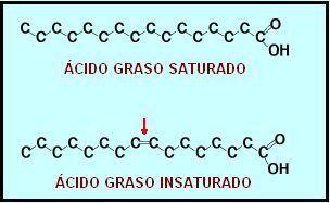 molécula de ácido graso saturado e insaturado