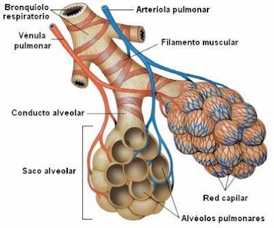 Componentes de la unidad respiratoria