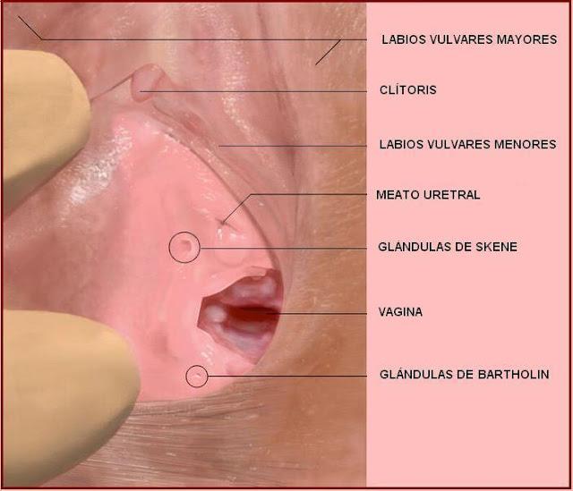 Vestíbulo vulvar