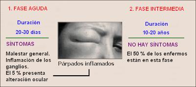 fase aguda e intermedia del mal de Chagas