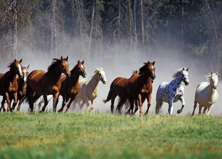 Troupeau de chevaux