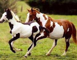 De beaux Mustangs