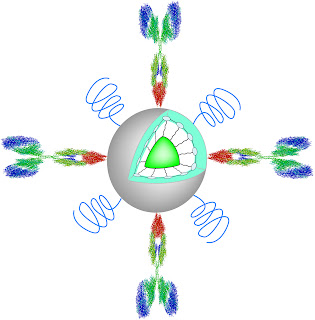 Illustration of a polymer dot nanoparticle structure. The core is a highly fluorescent polymer semiconductor material.