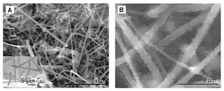 silicon nanowires Courtesy Nature Nanotechnology