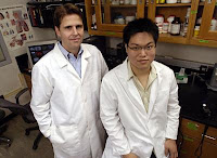 Caption: In a Johns Hopkins chemical and biomolecular engineering lab, Justin Hanes, an associate professor, and doctoral student Samuel K. Lai tested coated nanoparticles that could deliver medications through the body's sticky mucus layers. Credit: Will Kirk/JHU, Usage Restrictions: None.
