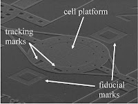 Caption: Electron micrograph of the NIST 'cell puller,' which measures the mechanical properties of a living cell. After the cell spreads and adheres to the center of the 200-micrometer-wide circular platform, half of the platform is pulled slowly away, while a sensor connected to the other half measures the force on the cell. Credit: D. Serrell/NIST, Usage Restrictions: None.