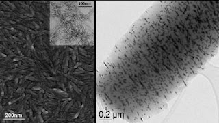 Caption: Left, an electron micrograph (TEM) of a metal, in this case platinum, deposited on cellulose. Inset, crystalline cellulose without metal. Right, TEM showing the pattern of platinum clustering along hydroxyl sites on the cellulose surface. Credit: Pacific Northwest National Laboratory, Usage Restrictions: None.