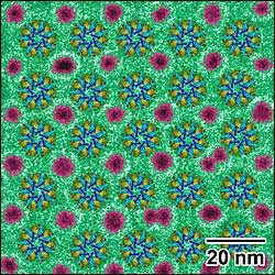 A cryo-electron micrograph showing a single layer of evenly spaced enzyme structures (colorful 'wheels') interspersed with gold nanoparticles (magenta).