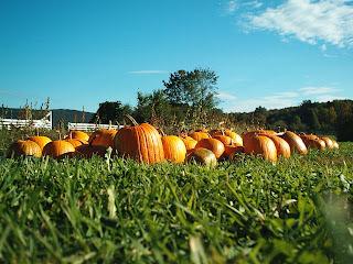 Pumpkins, taken at the Hancock Shaker village