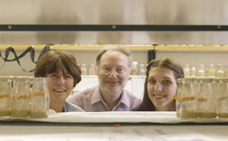 From left, scientists Kathleen Beckingham, Bruce Weisman and Tonya Leeuw are part of the Rice University team that used fruit flies to capture the first optical images of carbon nanotubes inside a living organism. Photo by JEFF FITLOW.