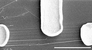 Caption: Nanowire electronics: Scanning electron microscope image shows electrodes connected to group of nanowires. Scale bar is five micrometers long. Credit: NIST. Usage Restrictions: None.