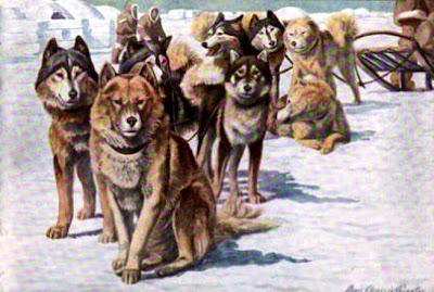 Alaskan Eskimo Dogs