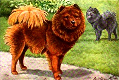 Chow or Chow Chow
