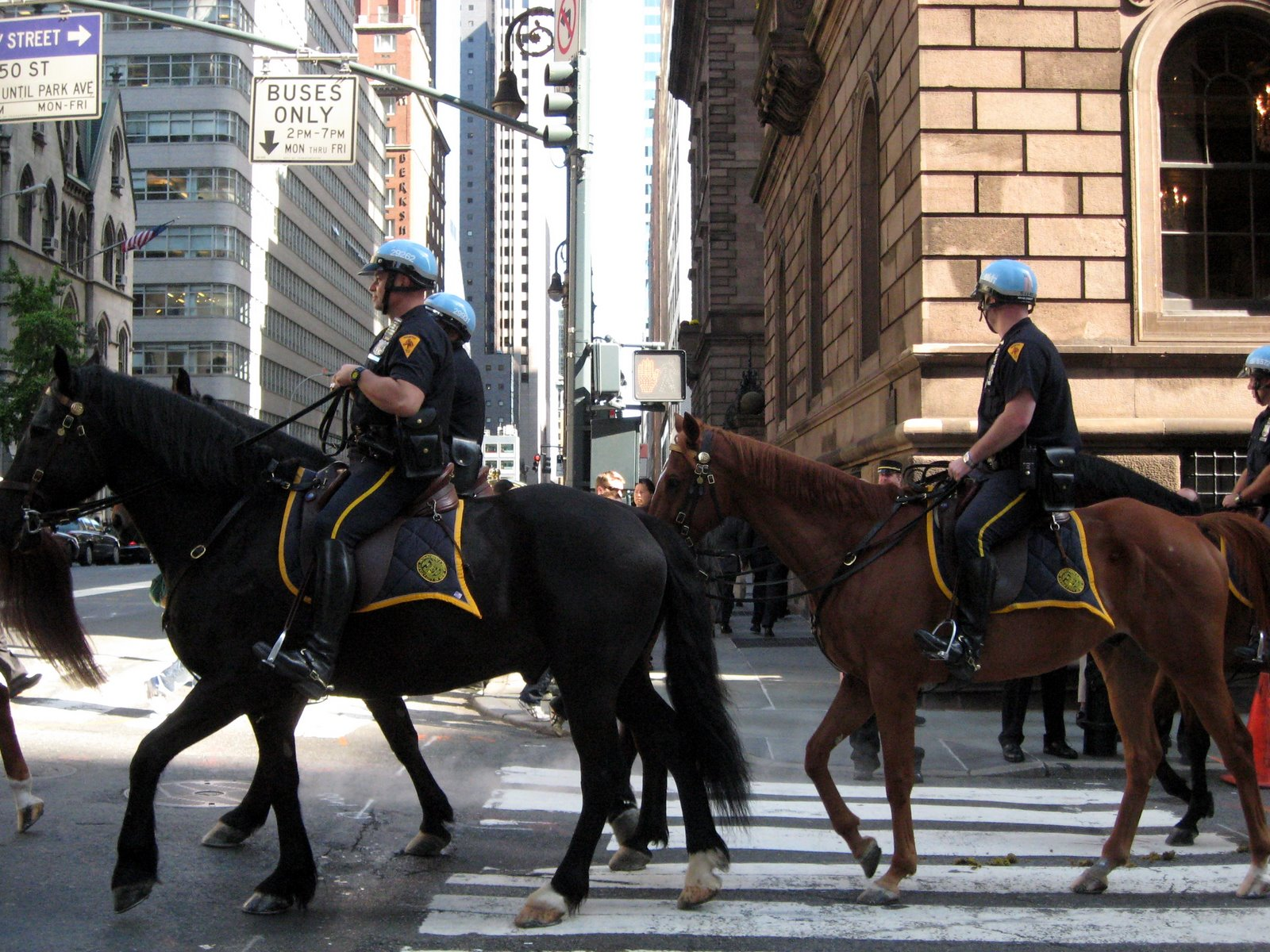Horse Mounted Police New York City