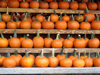 Wall Of Pumpkins Halloween