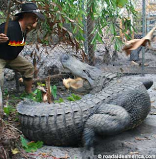Alligator Wrestling © roadsideamerica.com