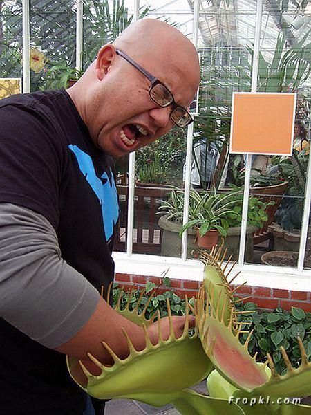 http://1.bp.blogspot.com/_TahXQ2WiF0s/S7FLz6hyMvI/AAAAAAAAcN4/2xZ2vNqnGFQ/s1600/Dangerous+Flesh+Eating+Plants+02.jpg