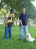 melatih anjing