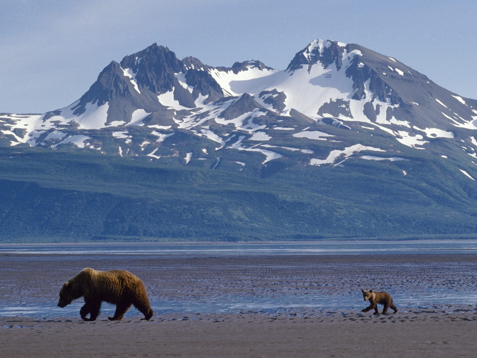 http://1.bp.blogspot.com/_TcwbPuj2SZ0/TLnKtUqI0LI/AAAAAAAASwA/dwqOR-jYICA/s1600/Bear-Cub-Katmai-Alaska.jpg