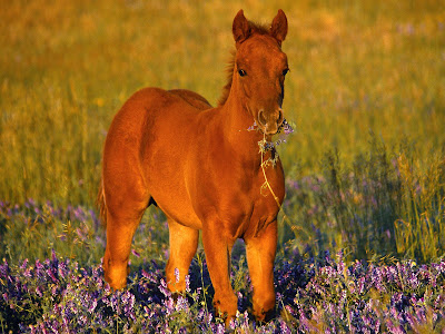 horses wallpaper desktop. horses wallpaper horse