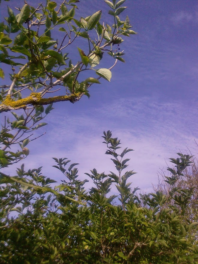 HIGH HEDGEROW IN SEPTEMBER  -  FOR SKYWATCH