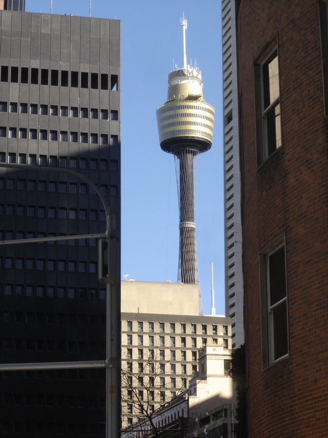 Sydney Tower la plus haute construction de Sydney - Vue panoramique