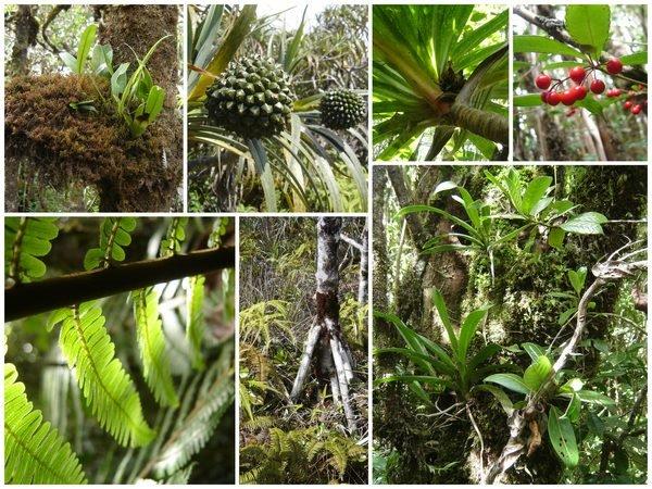 Richesse végétale de la forêt