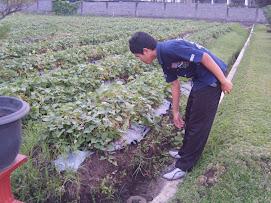 Agrobisnis SLAPUR