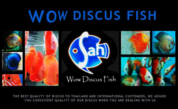Wow Discus Fish Gallery