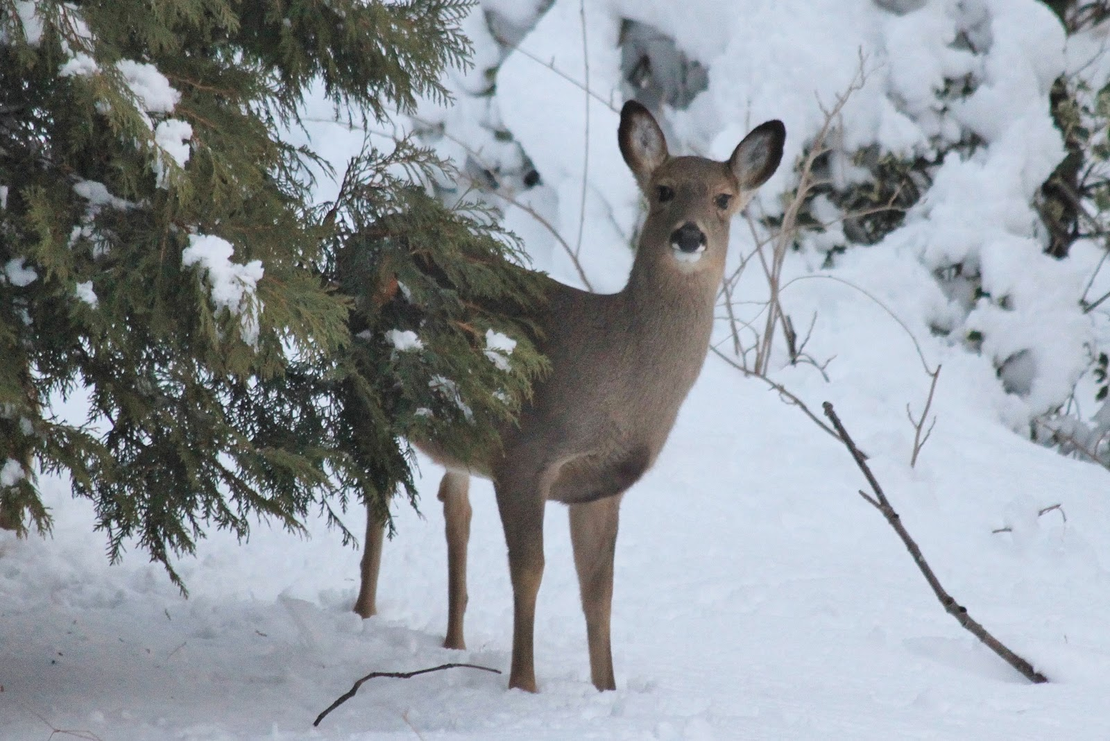 is it too cold for backyard wildlife nature on the edge of new