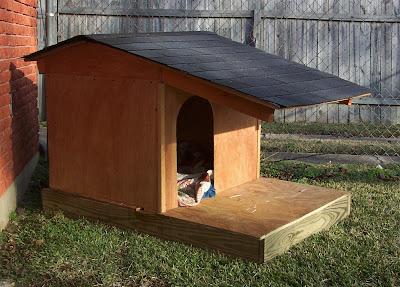 Cool Dog Houses With Pool