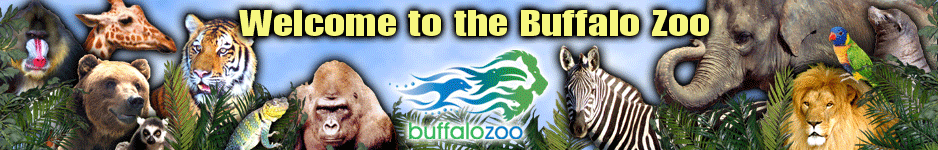 Buffalo Zoo Blog