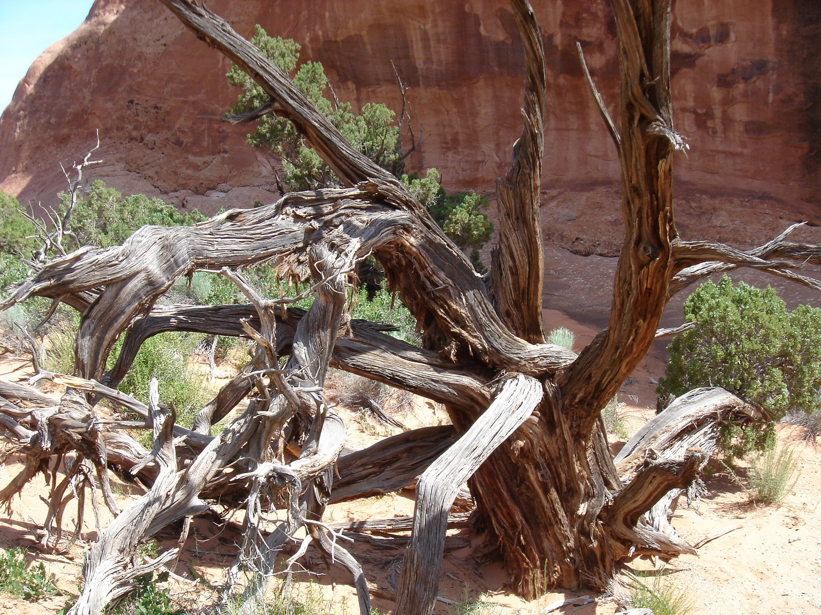 [06-03-2007+Moab+and+Arches,+Utah+015.jpg]