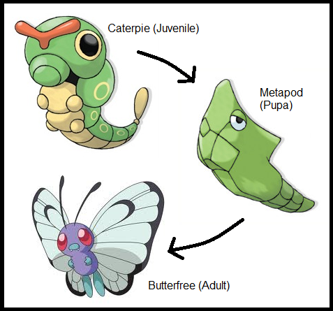 Pokemon Metapod Vector Game