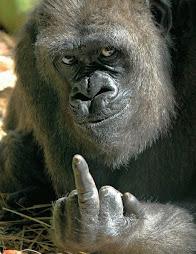 el mono buena onda te desea un feliz dia