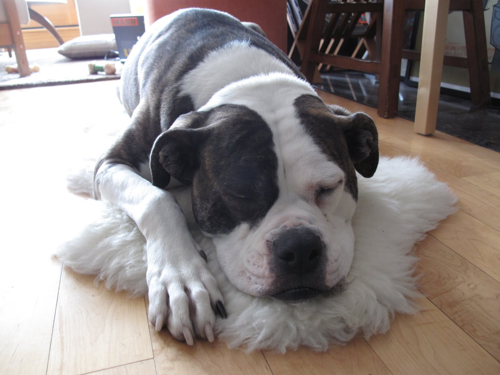 Dogs That Use Their Paws Like Hands