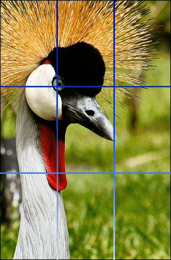 rule of thirds photography vertical. These Two Pictures Are Good Examples Of The Rule Thirds. Both Have Been Divided Up Into Thirds Horizontally And Vertically. Photo On Top Shows Photography Vertical