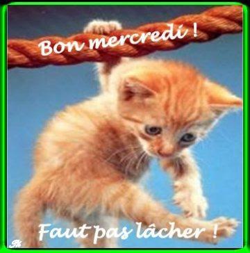 Le p'tit bonjour du matin, du midi ou du soir Myemoticone_gif-bon-mercredi_bon_mercredi