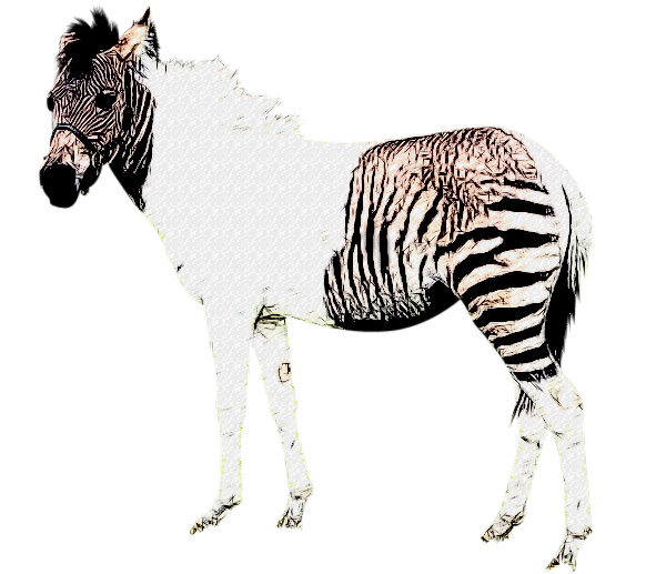 I Spy Animals: Zonkeys and zorses (or hebras?)