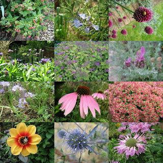 A dozen garden flowers which are good for bees
