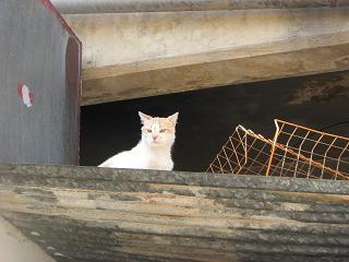 [cat+on+a+camp+tin+roof.jpg]