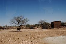 Empty Camel Market