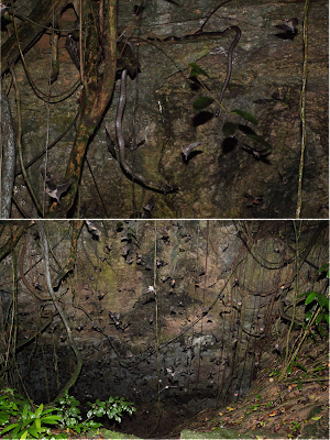 Dechronization boas and bats in western puerto rico boas and bats in western puerto rico publicscrutiny Image collections
