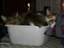 Ciuffi e Lucynda