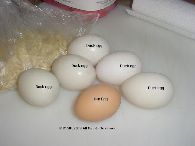 Duck Embryo Stages http://2footalligator.blogspot.com/2009/05/baking-with-duck-eggs.html