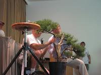 Yamaji-san, assisted by staff from Yasukunai Bonsai shop