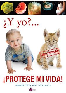 Esta semana en 'El Cabildo' la postura de las cofradías frente a la Ley del aborto